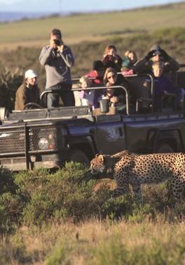 Wildlife, Wine and Garden Route Escorted Tour plus Cape Town