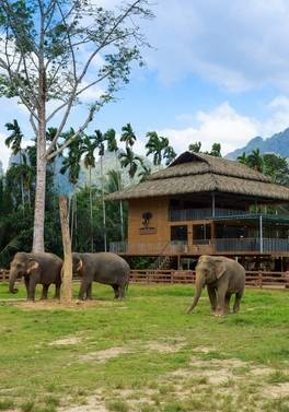 Explore Thailand with a stay at Elephant Hills - Thailand's first Luxury Tented Camps